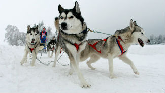 сайтPullman+City+Quest+Dog+Sled+Race+1R33oyJlQGcl